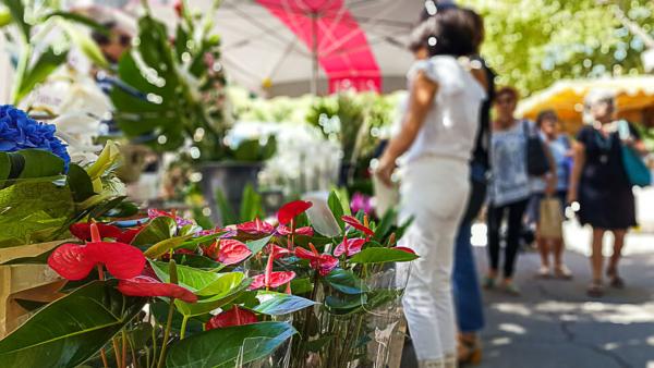stella fleurs artisan fleuriste arles