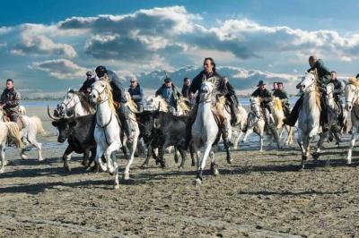 festival d'abrivados sur les plages des saintes maries de la mer le 11 novembre