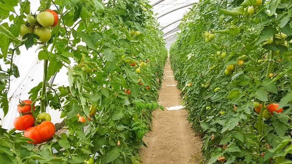 Potager du Cassoulen producteur legumes vente directe à graveson