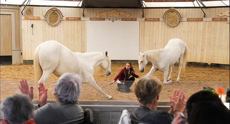spectacle equestra les mylords tarascon audrey fieloux