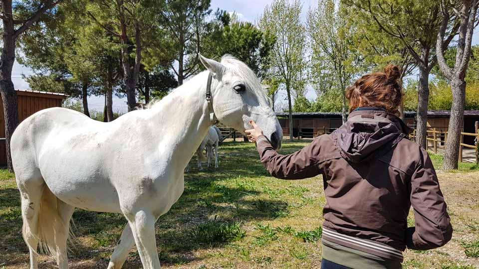 spectacle equestre arles les mylords tarascon audrey fieloux