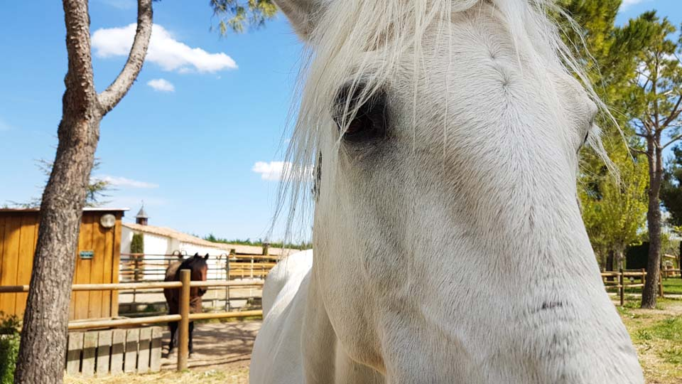 spectacle equestre les mylords tarascon audrey fieloux
