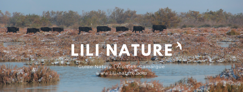 guide nature alpilles camargue