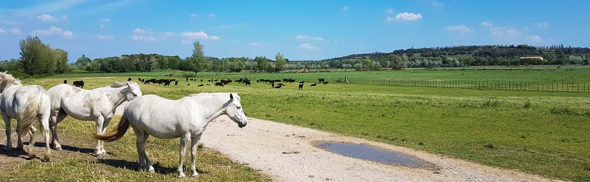 producteur vente directe viandes bio fontvieille les 2 rives Manade Chauvet