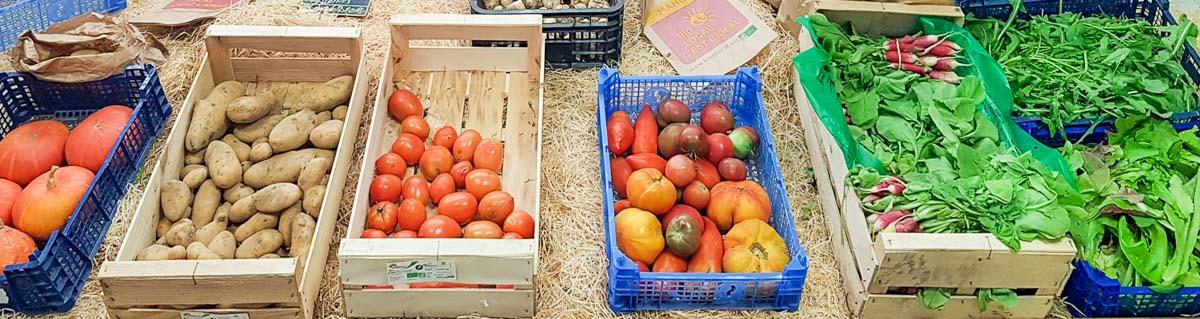 producteur et vente directe fruits et légumes bio alpilles, AMAP Les Jardins de Cidamos à Fontvieille