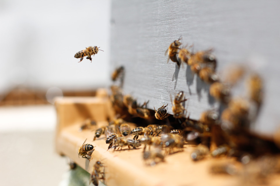 producteurs miel alpilles povence