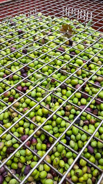 Les oliviers du Moulin huile d'olive AOP Vallée des baux - Moulin Mas Saint Jean à Fontvieille