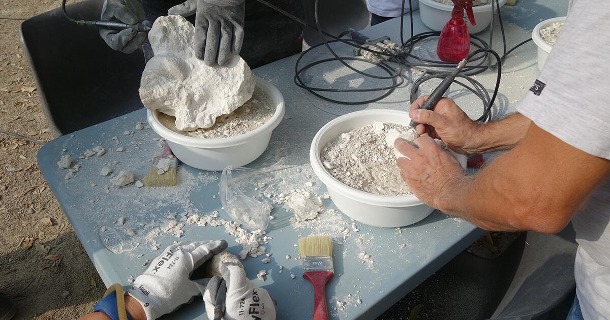 atelier dégagement fossiles alpilles