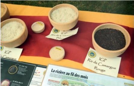 causeriz rendez vous du parc naturel régional de camargue