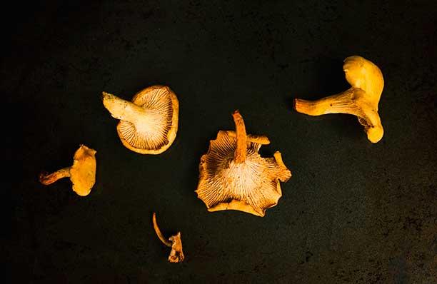 champignons des Alpilles
